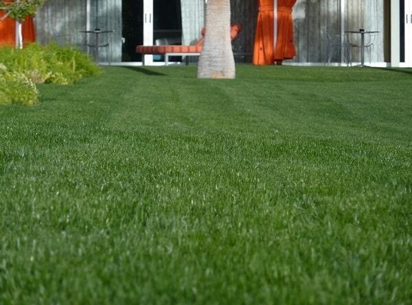 Getting Started with a New Lawn